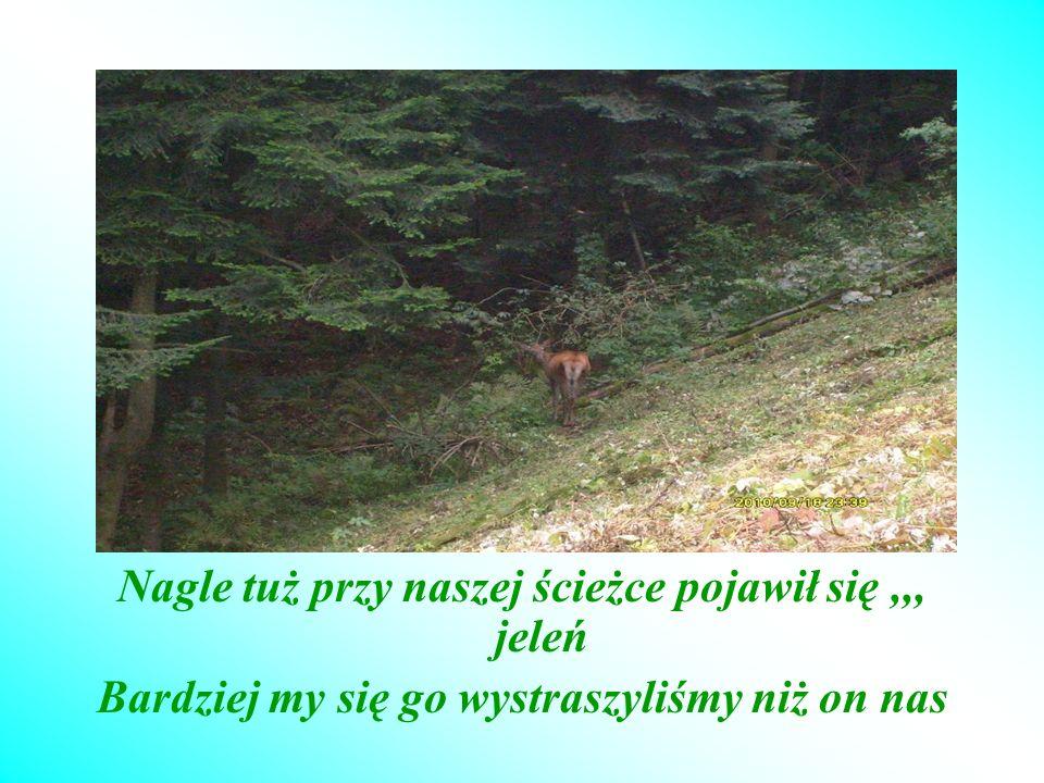 Nagle tuż przy naszej ścieżce pojawił się ,,, jeleń