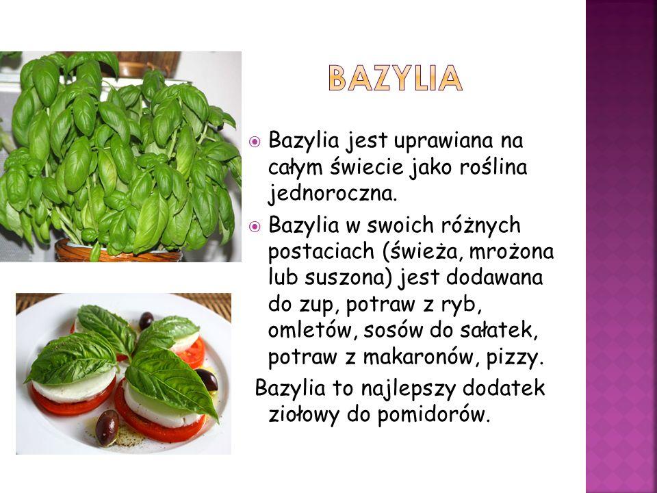 BAZYLIA Bazylia jest uprawiana na całym świecie jako roślina jednoroczna.