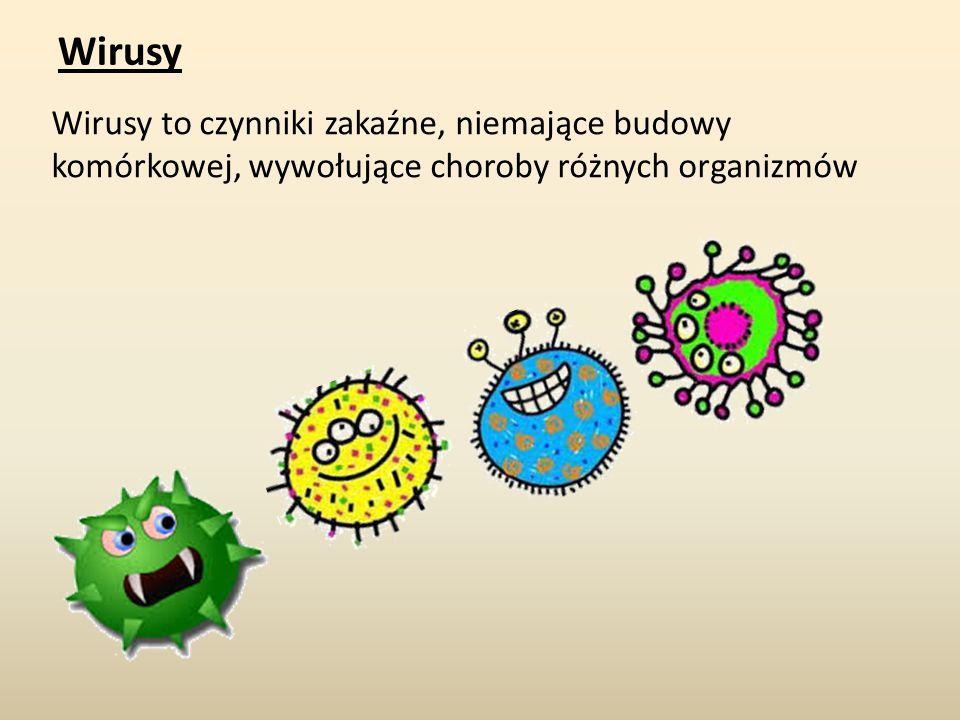 Wirusy Wirusy to czynniki zakaźne, niemające budowy komórkowej, wywołujące choroby różnych organizmów.