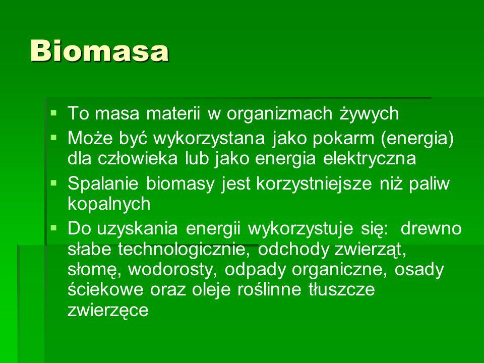 Biomasa To masa materii w organizmach żywych