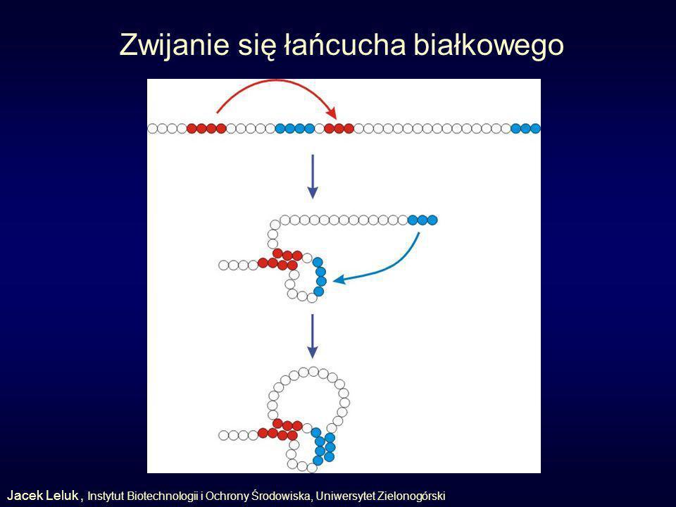 Zwijanie się łańcucha białkowego