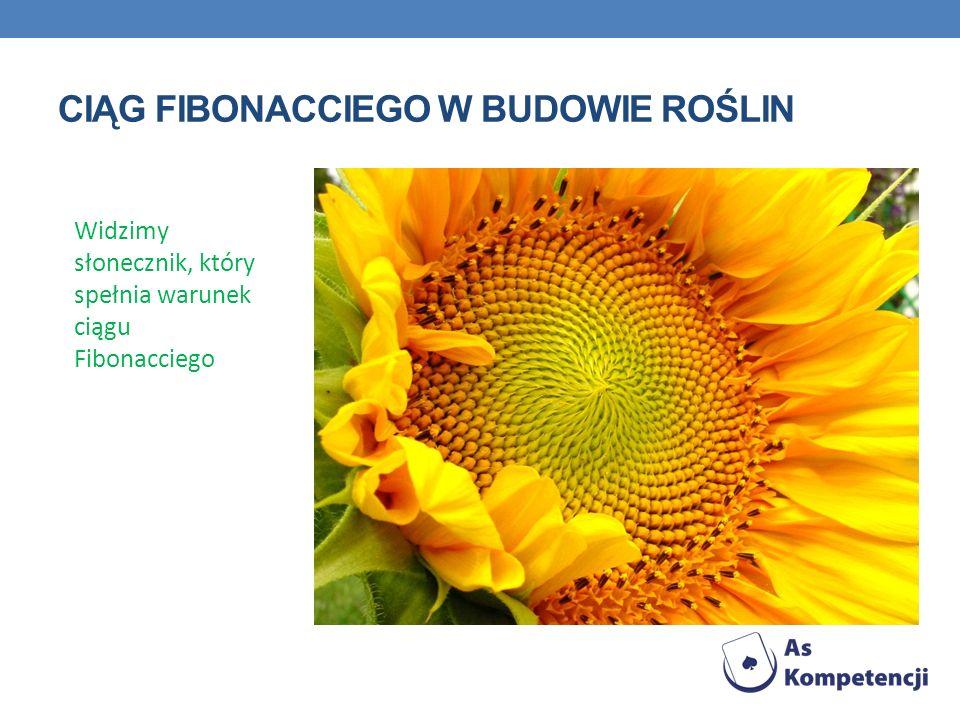 Ciąg fibonacciego w budowie roślin