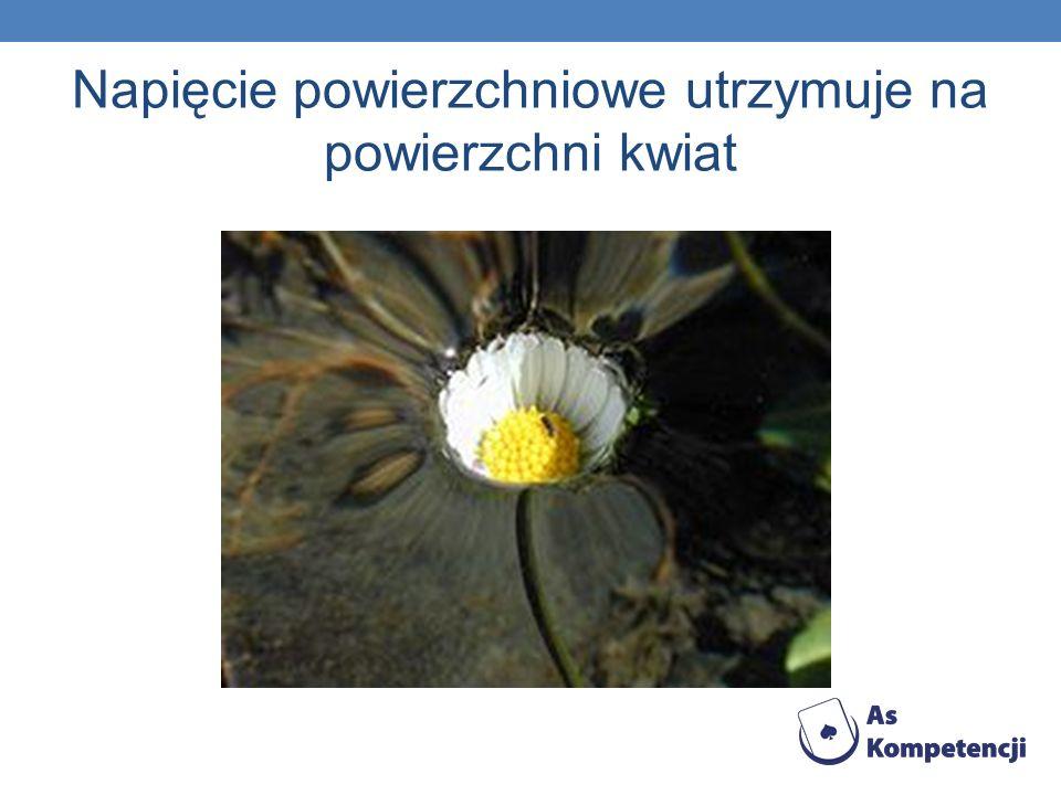 Napięcie powierzchniowe utrzymuje na powierzchni kwiat