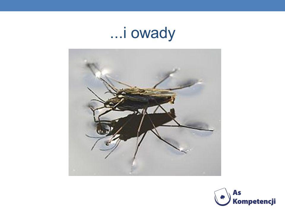 ...i owady