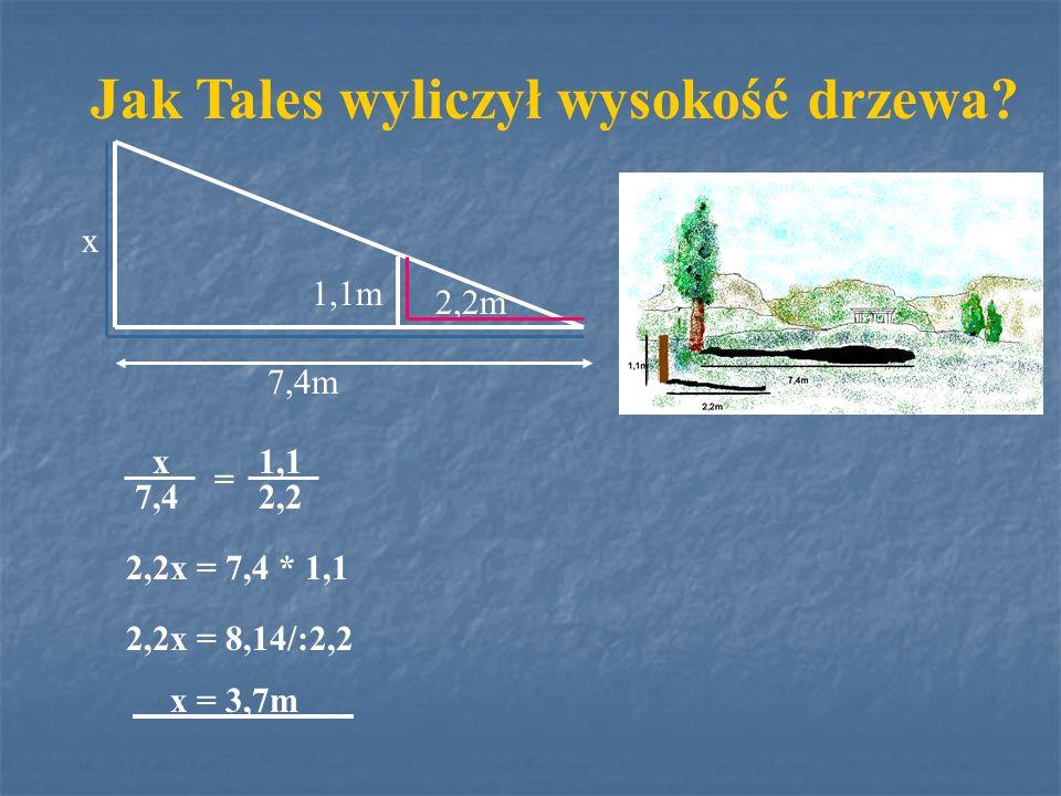 Jak Tales wyliczył wysokość drzewa