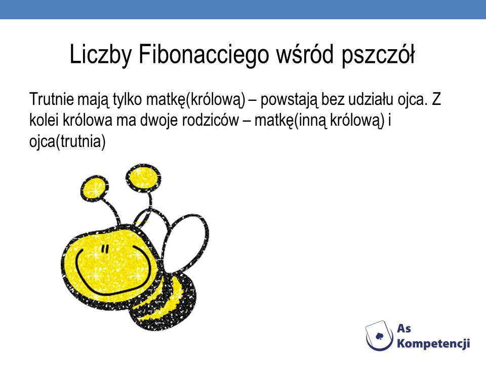 Liczby Fibonacciego wśród pszczół