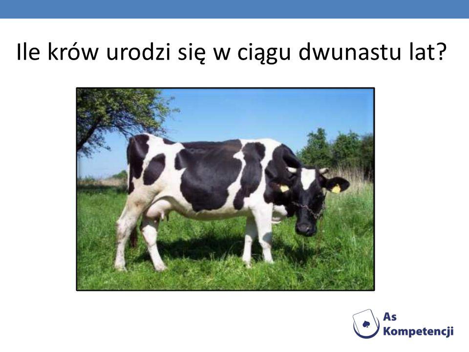 Ile krów urodzi się w ciągu dwunastu lat
