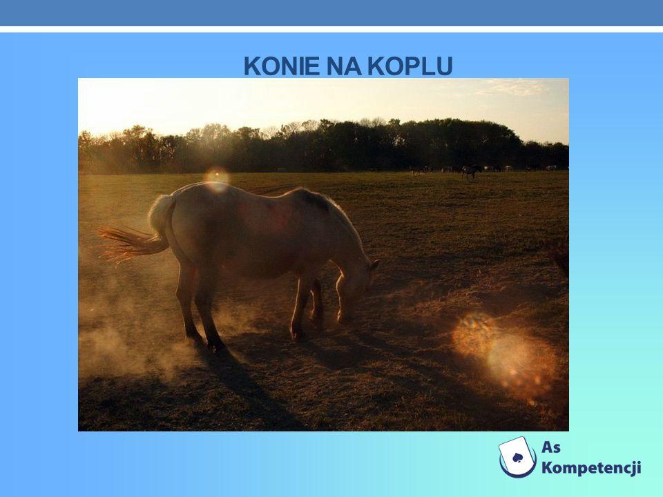 Konie na koplu