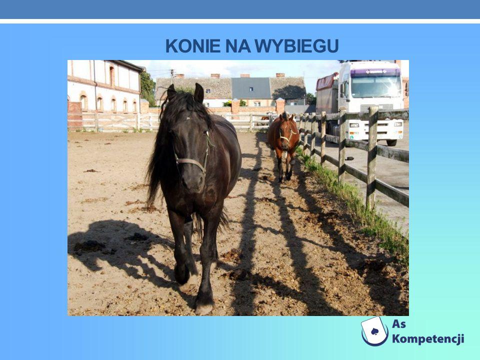 Konie na wybiegu