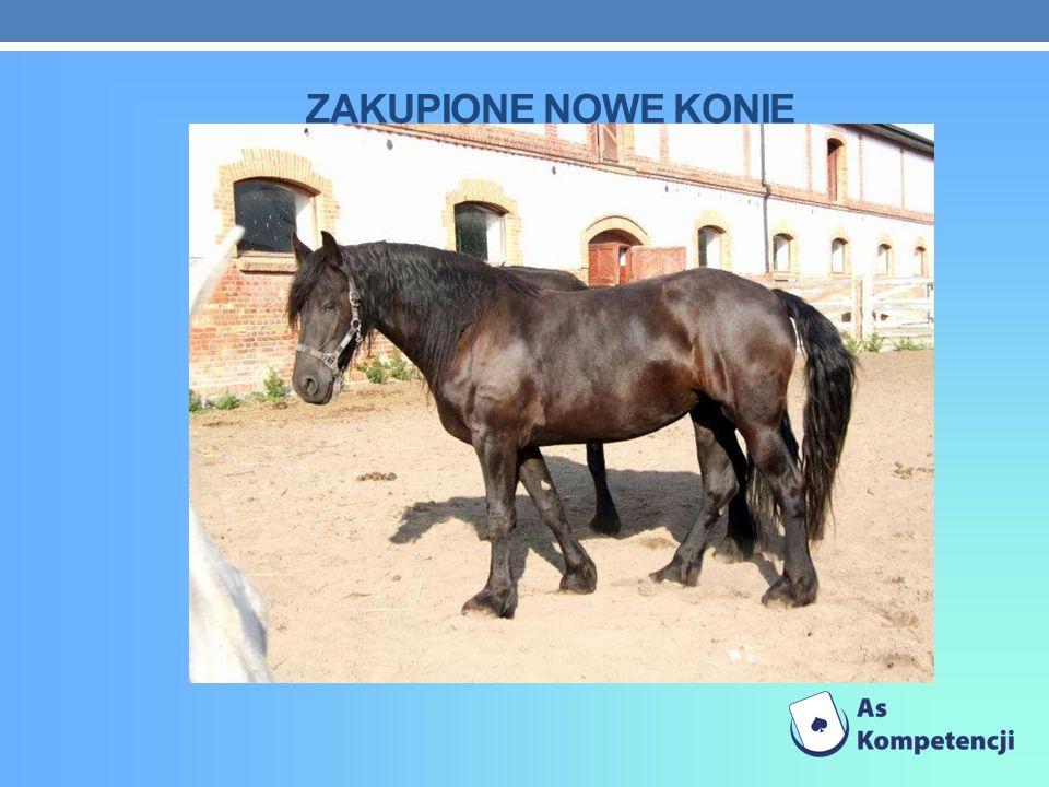Zakupione nowe konie