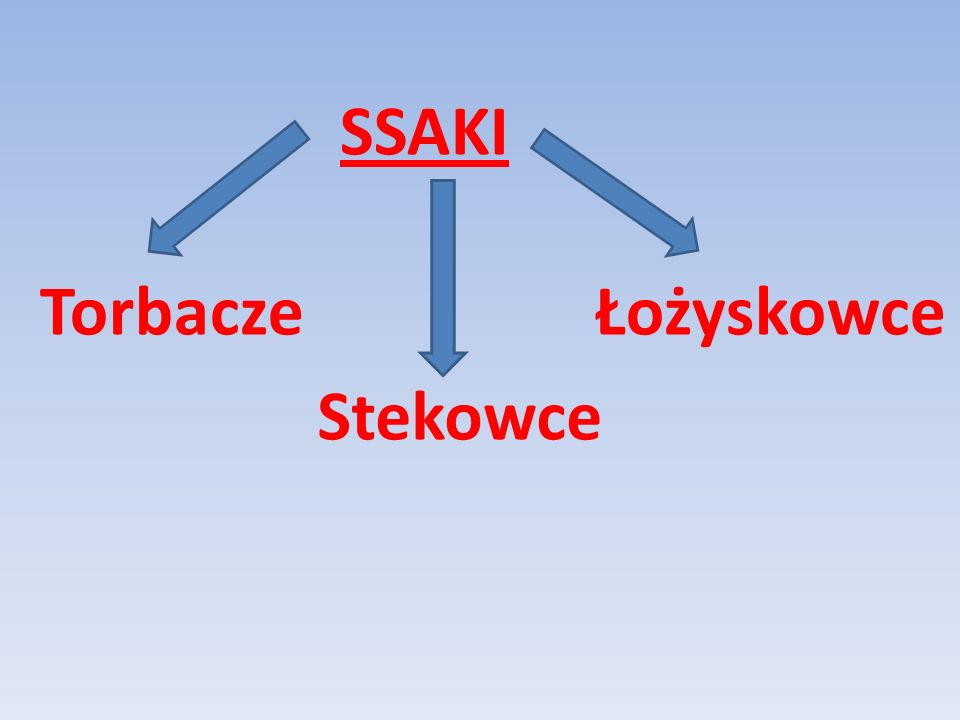 SSAKI Torbacze Łożyskowce Stekowce