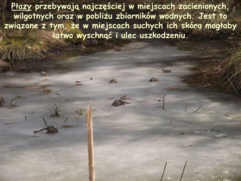 Płazy przebywają najczęściej w miejscach zacienionych, wilgotnych oraz w pobliżu zbiorników wodnych.