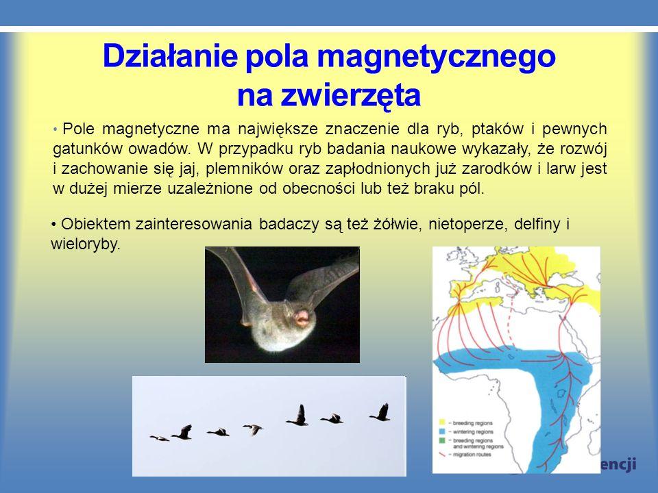 Działanie pola magnetycznego na zwierzęta