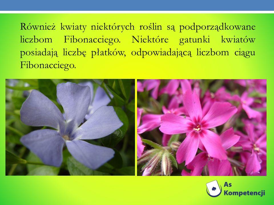 Również kwiaty niektórych roślin są podporządkowane liczbom Fibonacciego.