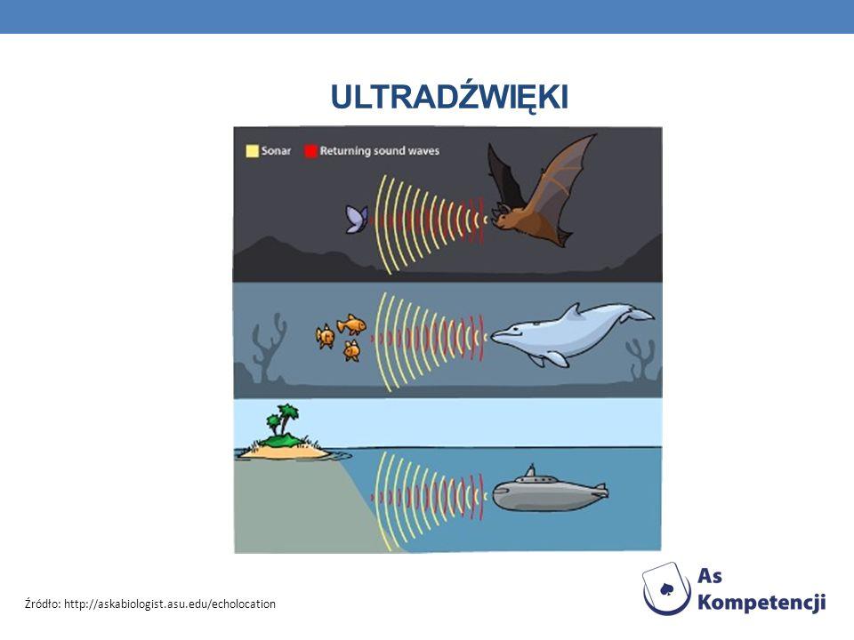 ultradźwięki Źródło: http://askabiologist.asu.edu/echolocation