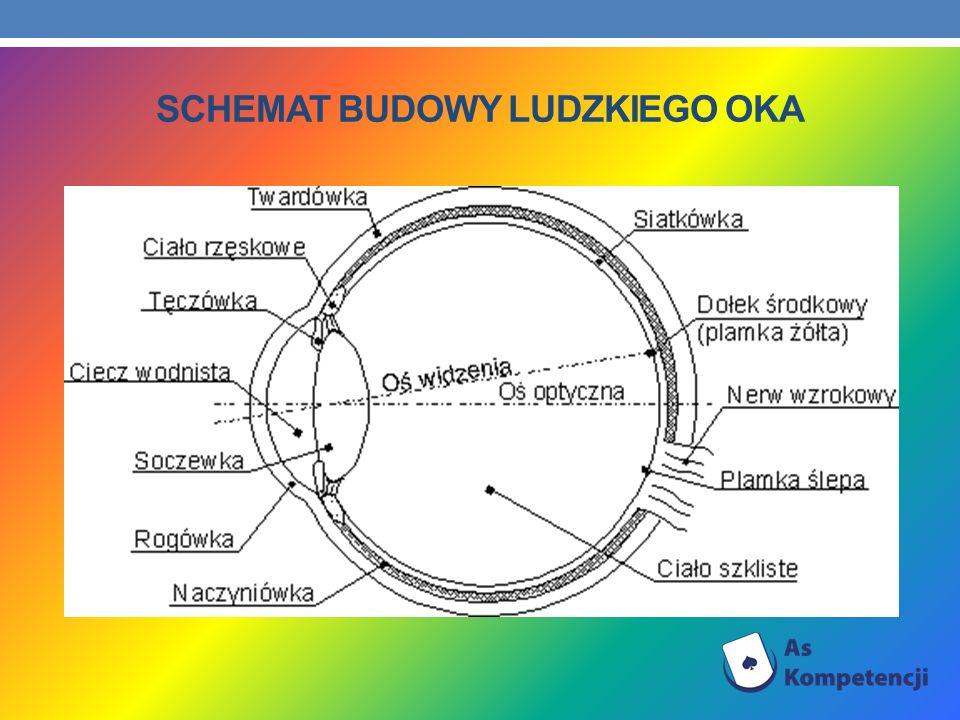 Schemat budowy ludzkiego oka