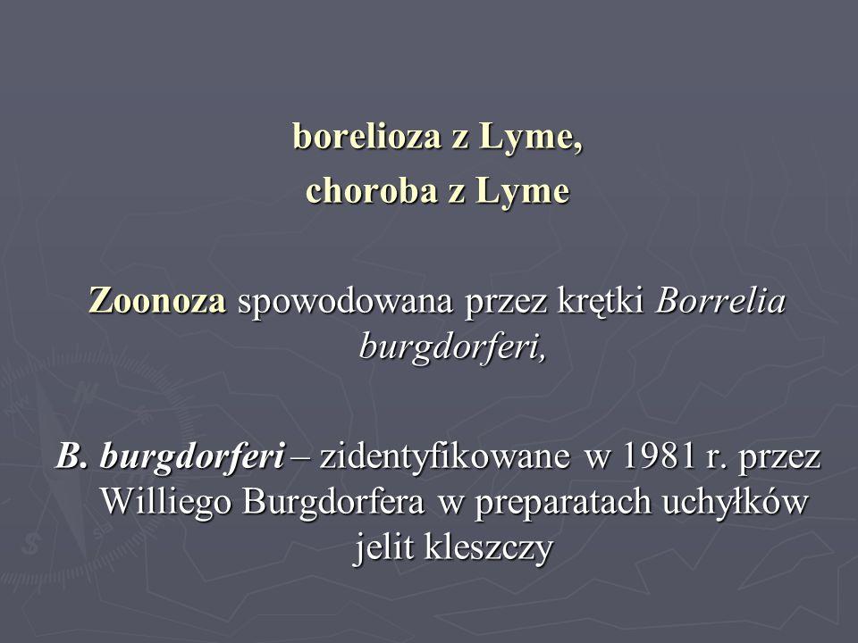 Zoonoza spowodowana przez krętki Borrelia burgdorferi,
