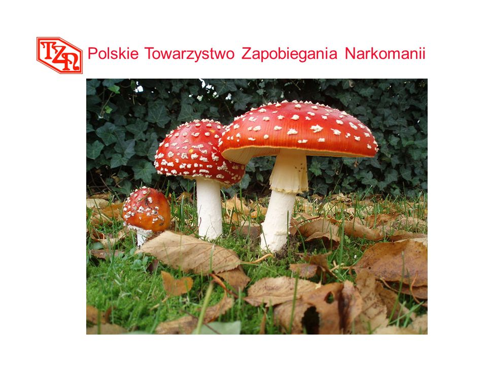 Polskie Towarzystwo Zapobiegania Narkomanii