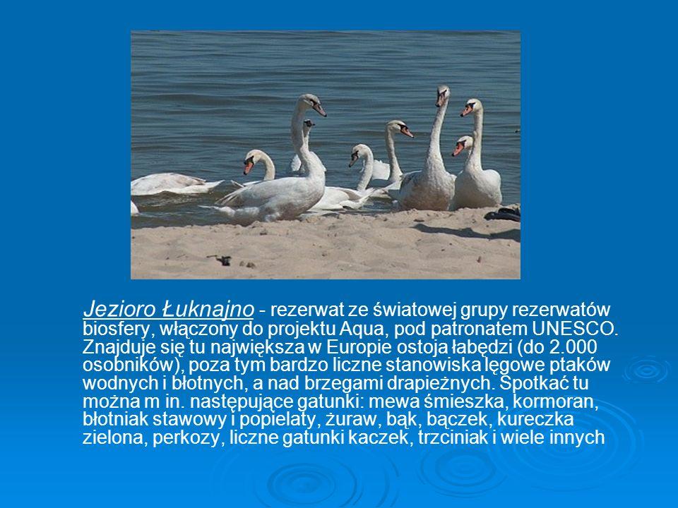 Jezioro Łuknajno - rezerwat ze światowej grupy rezerwatów biosfery, włączony do projektu Aqua, pod patronatem UNESCO.