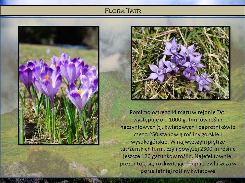 Flora Tatr