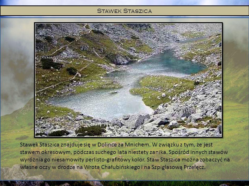 Stawek Staszica