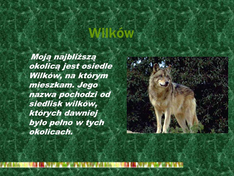 Wilków