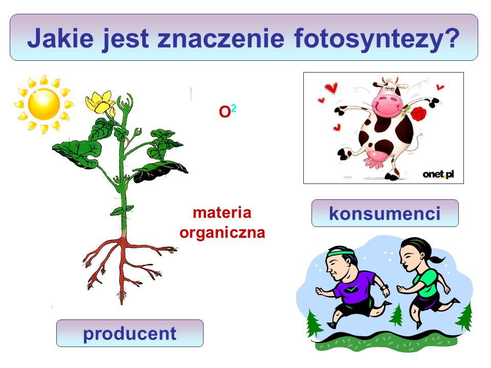 Jakie jest znaczenie fotosyntezy