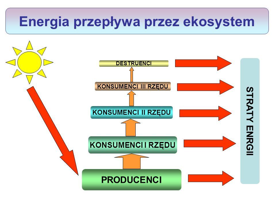 Energia przepływa przez ekosystem