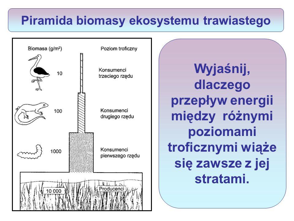 Piramida biomasy ekosystemu trawiastego