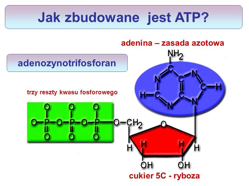 adenozynotrifosforan