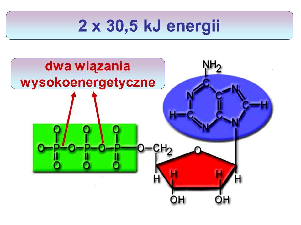 dwa wiązania wysokoenergetyczne