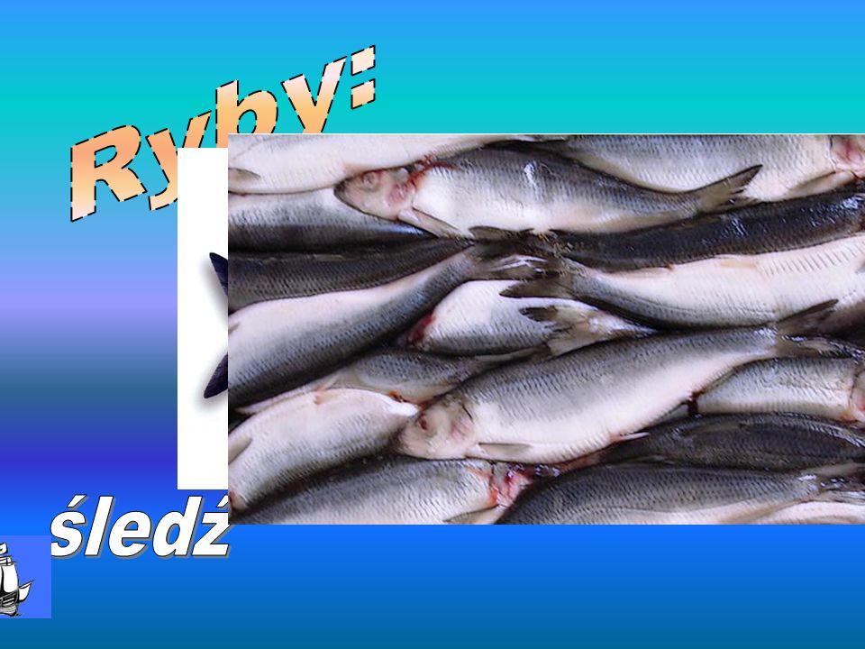 Ryby: śledź