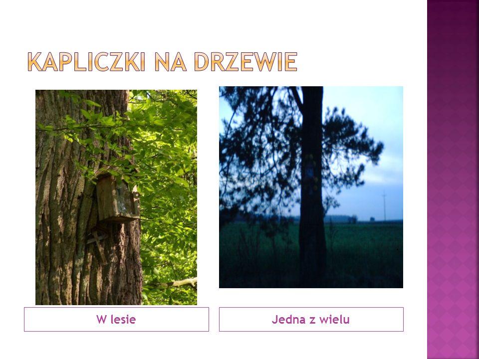 Kapliczki na drzewie W lesie Jedna z wielu