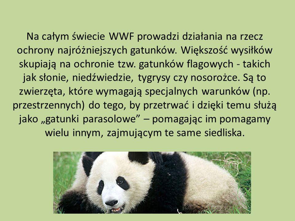 Na całym świecie WWF prowadzi działania na rzecz ochrony najróżniejszych gatunków.