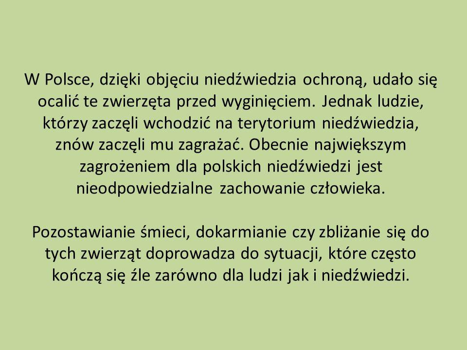 W Polsce, dzięki objęciu niedźwiedzia ochroną, udało się ocalić te zwierzęta przed wyginięciem.