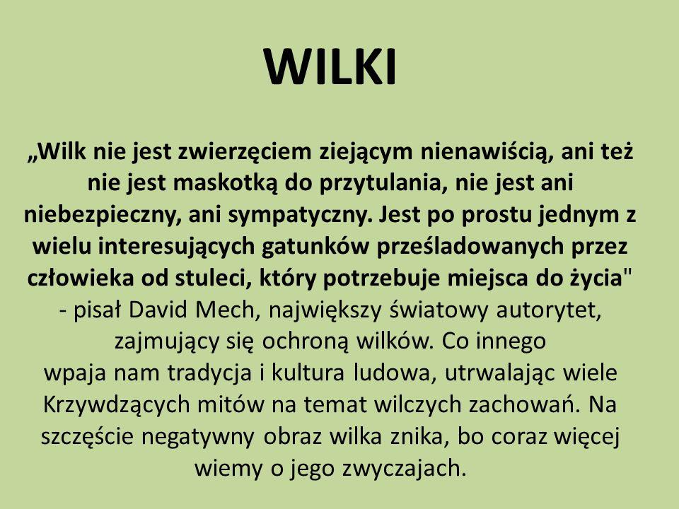 """WILKI """"Wilk nie jest zwierzęciem ziejącym nienawiścią, ani też nie jest maskotką do przytulania, nie jest ani niebezpieczny, ani sympatyczny."""