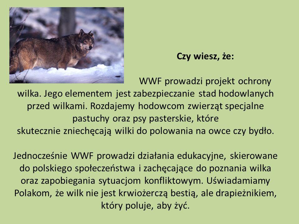 Czy wiesz, że:. WWF prowadzi projekt ochrony wilka