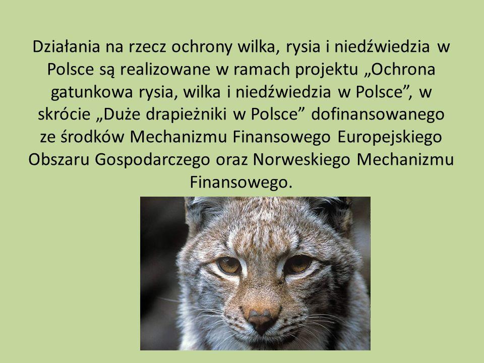"""Działania na rzecz ochrony wilka, rysia i niedźwiedzia w Polsce są realizowane w ramach projektu """"Ochrona gatunkowa rysia, wilka i niedźwiedzia w Polsce , w skrócie """"Duże drapieżniki w Polsce dofinansowanego ze środków Mechanizmu Finansowego Europejskiego Obszaru Gospodarczego oraz Norweskiego Mechanizmu Finansowego."""