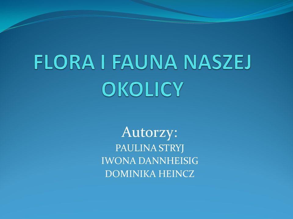 FLORA I FAUNA NASZEJ OKOLICY