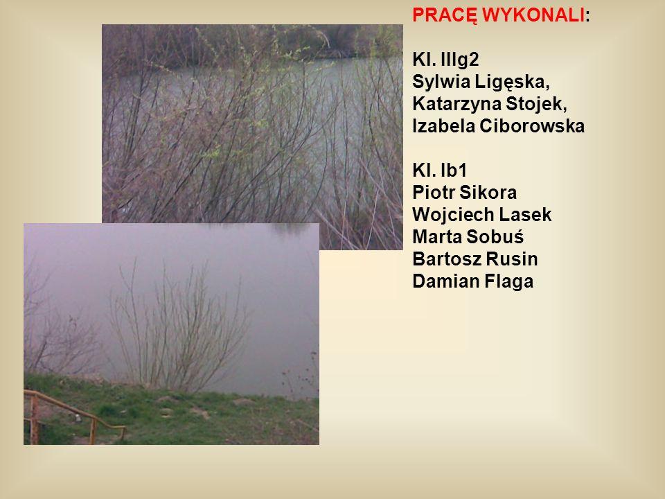 PRACĘ WYKONALI:Kl. IIIg2. Sylwia Ligęska, Katarzyna Stojek, Izabela Ciborowska. Kl. Ib1. Piotr Sikora.