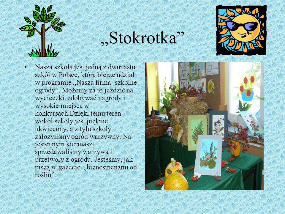 """""""Stokrotka"""