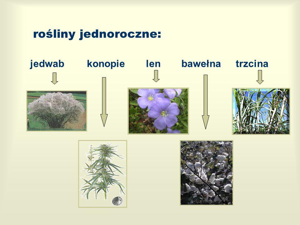 rośliny jednoroczne: jedwab konopie len bawełna trzcina