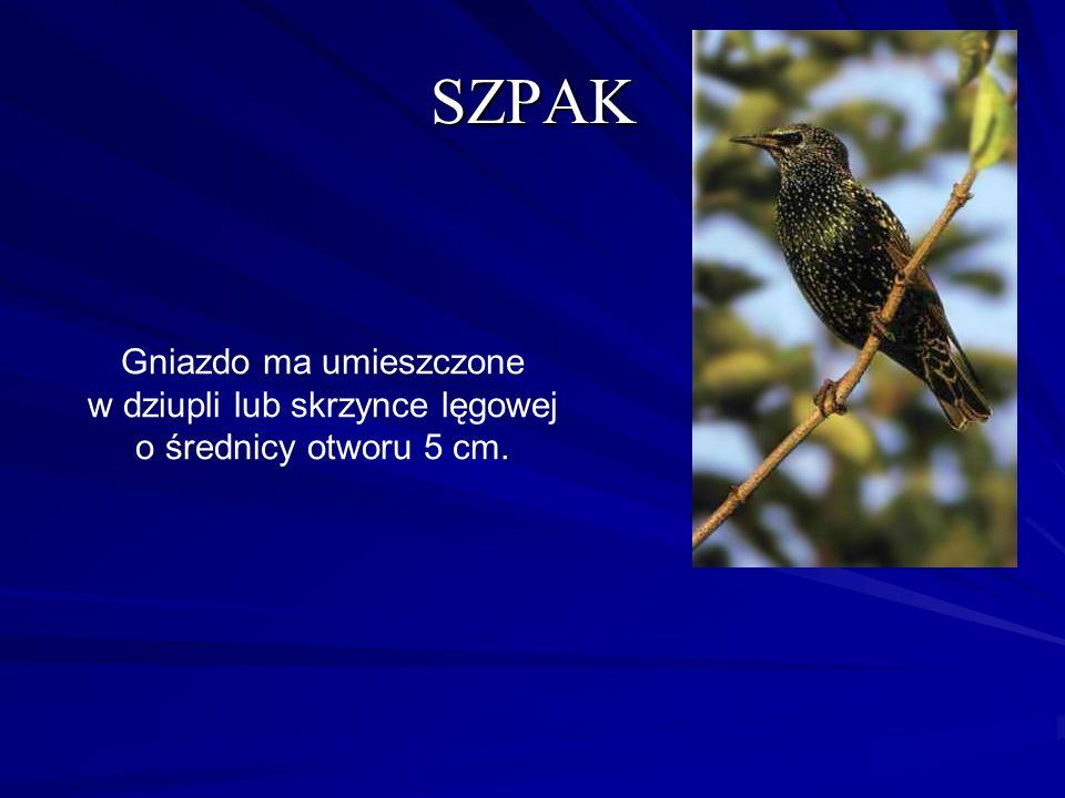 SZPAK Gniazdo ma umieszczone w dziupli lub skrzynce lęgowej o średnicy otworu 5 cm.
