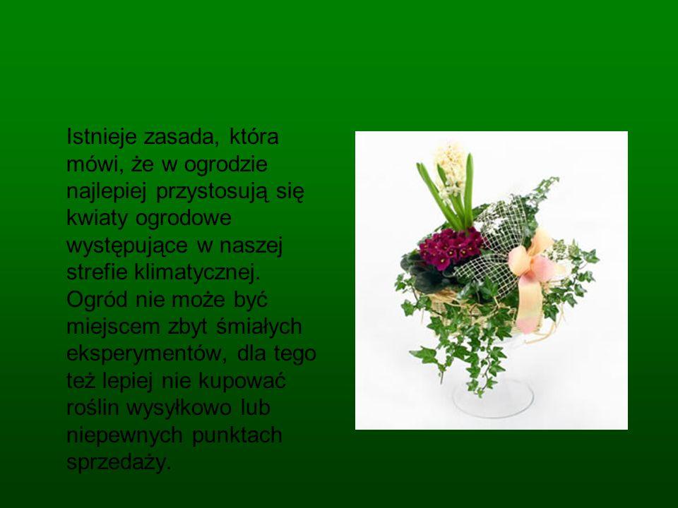 Istnieje zasada, która mówi, że w ogrodzie najlepiej przystosują się kwiaty ogrodowe występujące w naszej strefie klimatycznej.