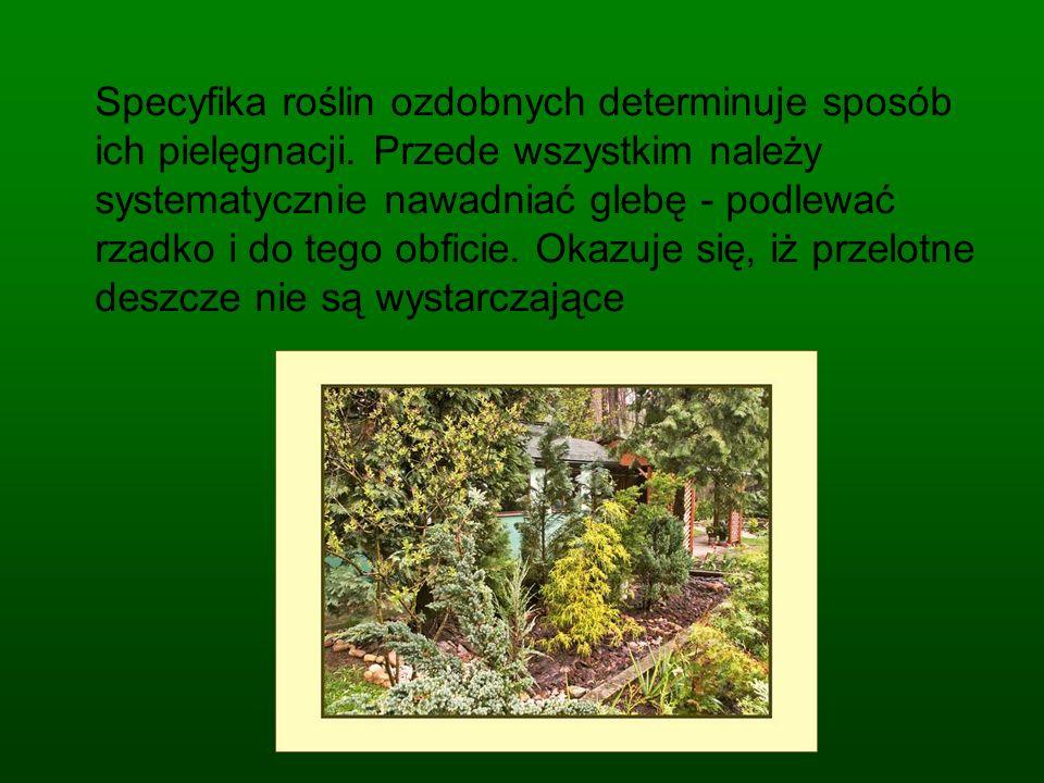 Specyfika roślin ozdobnych determinuje sposób ich pielęgnacji