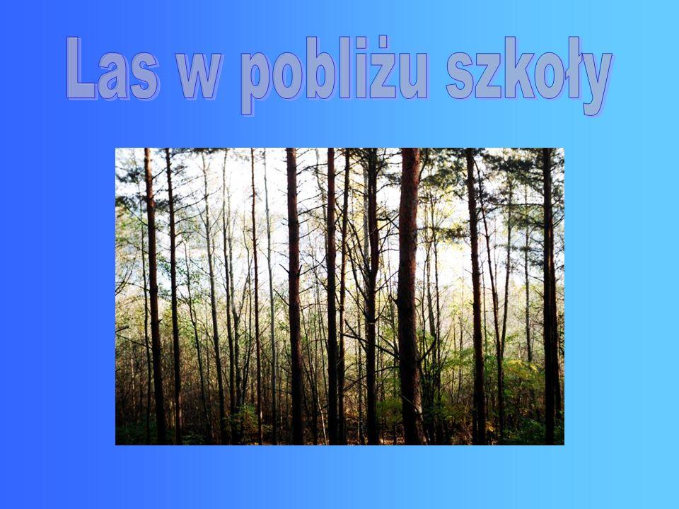 Las w pobliżu szkoły