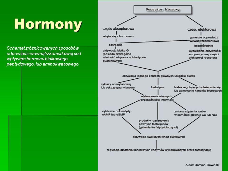 Hormony Schemat zróżnicowanych sposobów odpowiedzi wewnątrzkomórkowej pod wpływem hormonu białkowego, peptydowego, lub aminokwasowego.