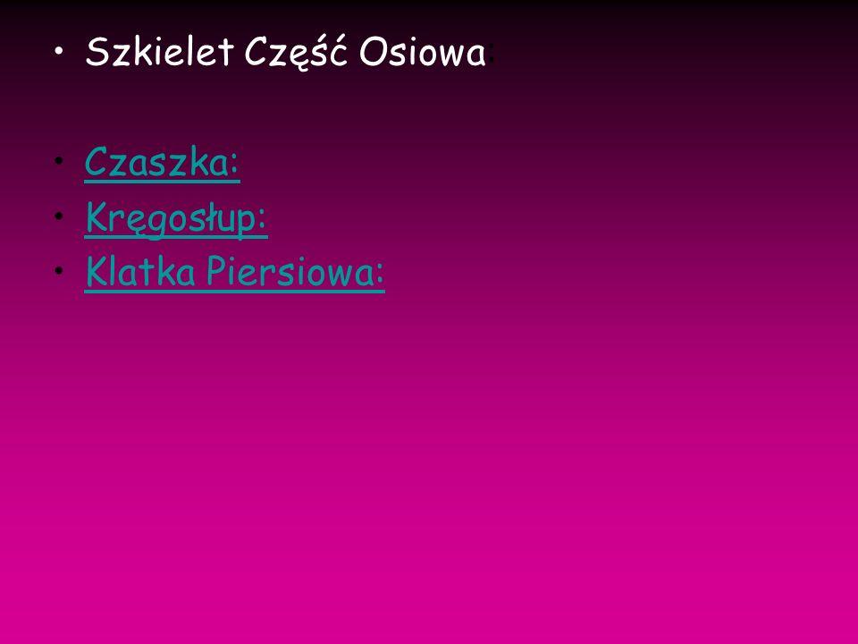Szkielet Część Osiowa: