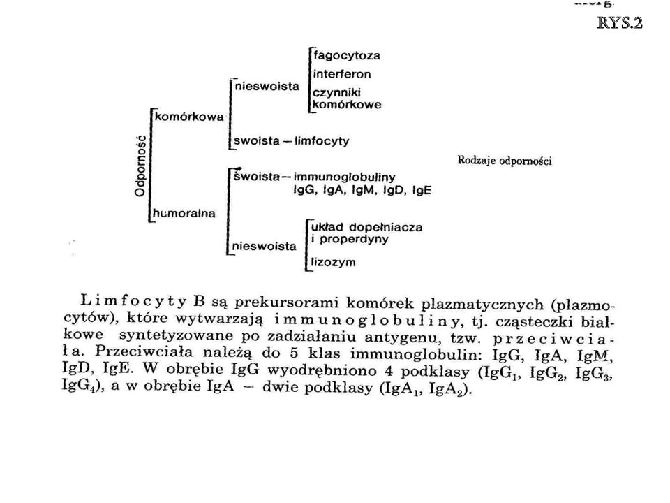 rys.2