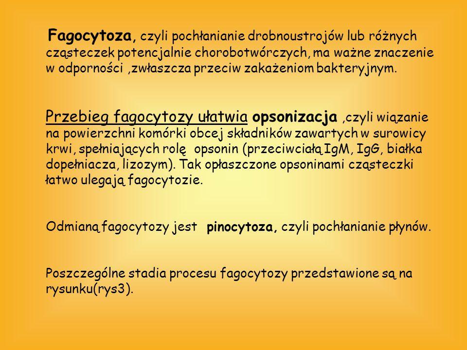 Fagocytoza, czyli pochłanianie drobnoustrojów lub różnych cząsteczek potencjalnie chorobotwórczych, ma ważne znaczenie w odporności ,zwłaszcza przeciw zakażeniom bakteryjnym.
